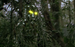 Predator movie showing camouflage effect and Predator's eyes light up